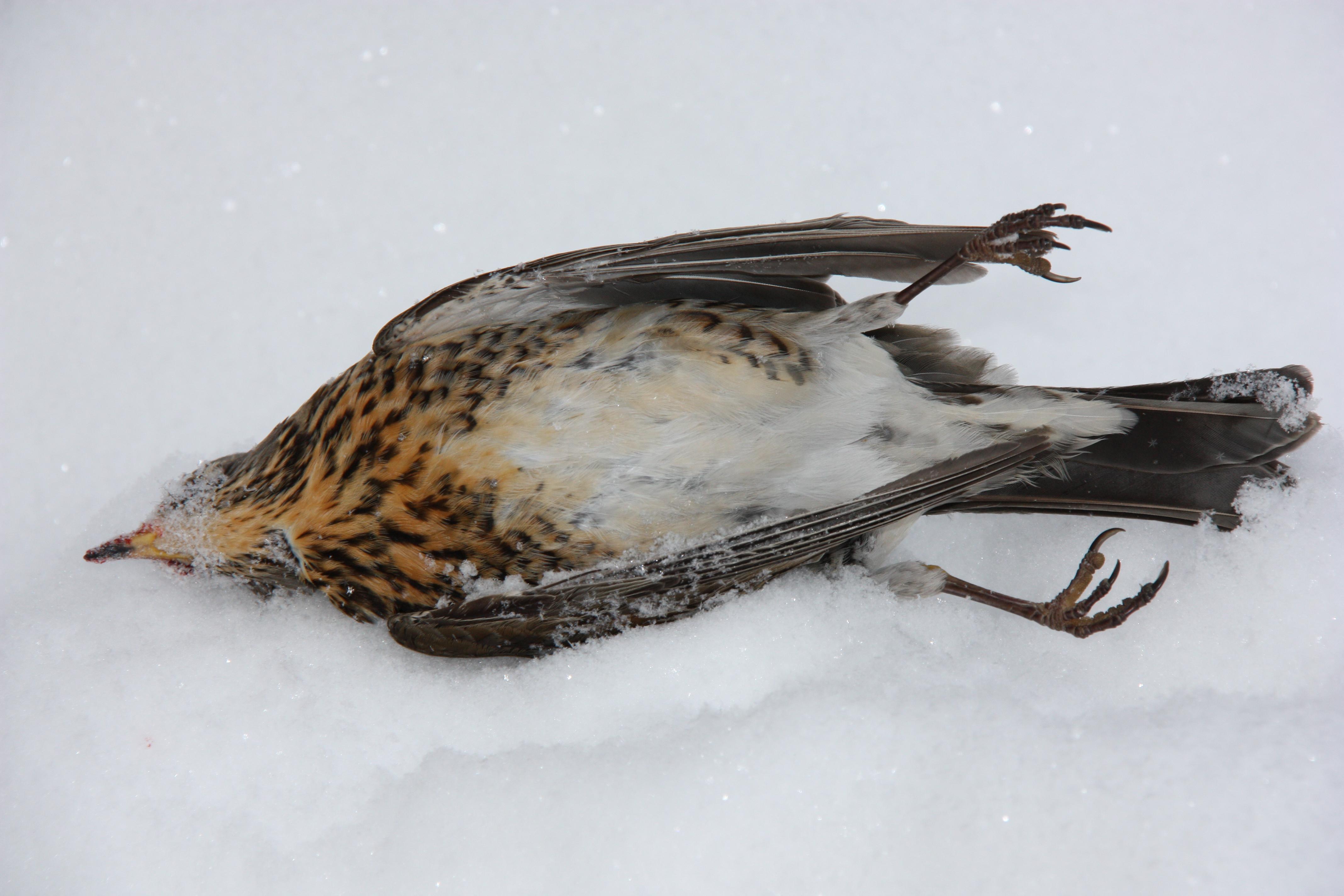 Хищные птицы владимирской области
