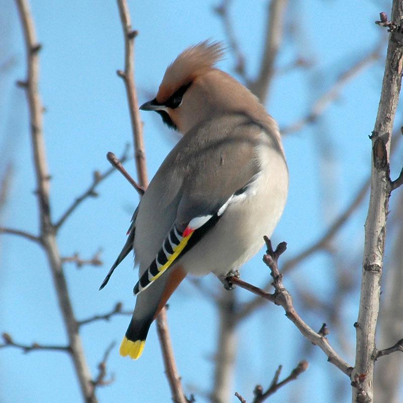 """,""www.ornithologist.ru"