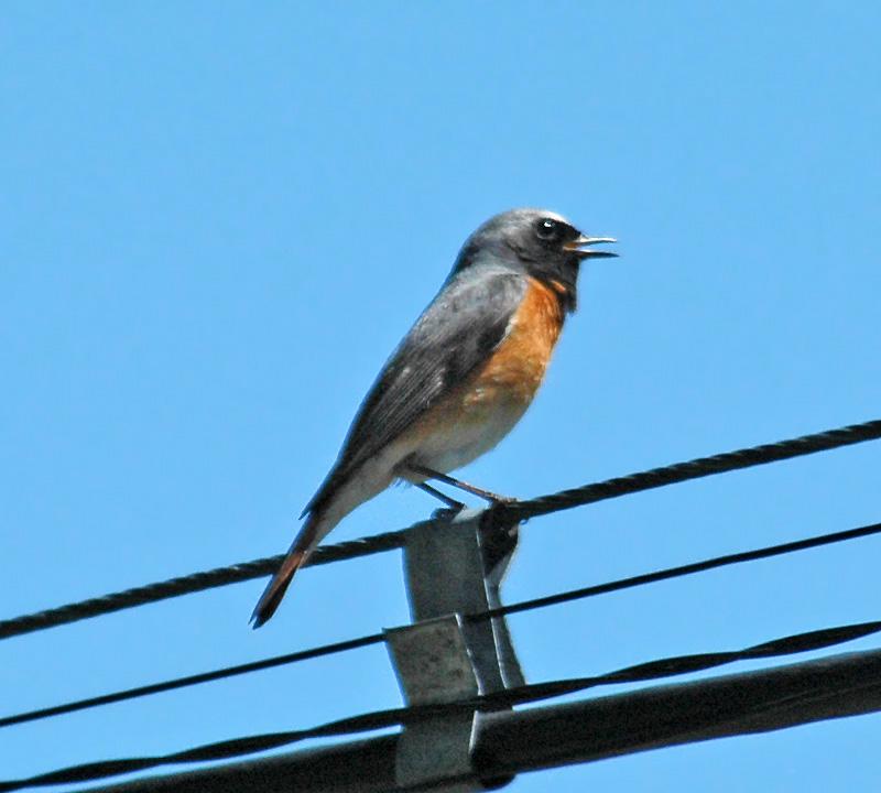 птицы владимирской области фото с названиями