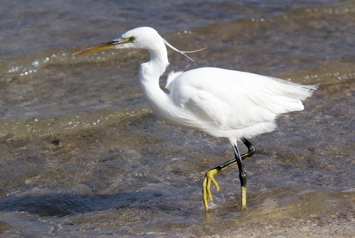 Фотографии - алфавитный определитель русских названий птиц