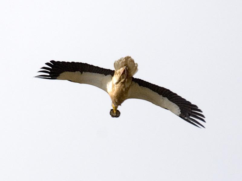 Зимующие птицы южного урала фото